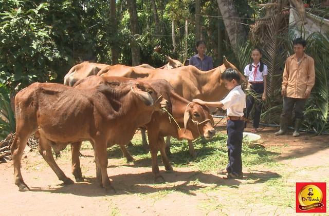 Gia đình anh Cao Văn Minh cùng nhau chăm sóc đàn bò ngày càng phát triển