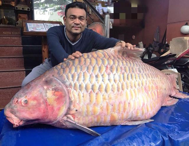 Cá hô hơn 100kg là rất hiếm trên thị trường