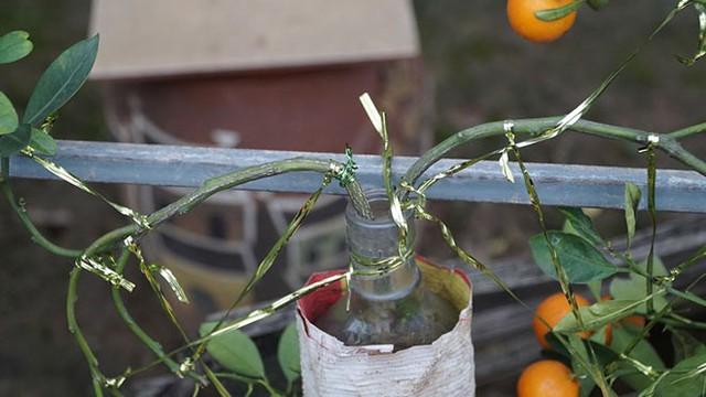 Phải bọc những chai trong lớp giấy xi măng để chống cháy rễ.