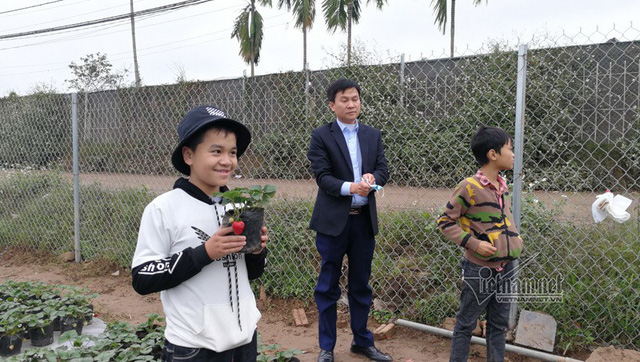 Gia đình anh Phạm Huy Hoàng khi đi thăm quan vườn hoa Nhật Tân cũng đã ghé vào mua dâu tây đang ra quả về trồng chơi Tết