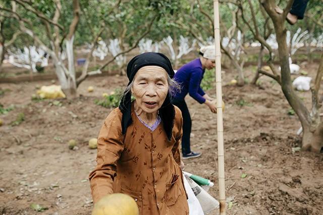 Cụ Lý Thị Toan (73 tuổi) chia sẻ: Đặc trưng của bưởi trên đất Diễn không nơi nào có được đó là vị bưởi thơm nức phòng dù chỉ để 2-3 quả. Không giống như các loại bưởi khác, cây bưởi Diễn càng già quả lại càng nhỏ và vị ngọt càng trở nên đặc biệt, sắc mà thanh. Những cây có tuổi từ 15 đến 20 năm, trái bưởi chỉ còn to nhỉnh hơn trái cam. Bưởi Diễn chính gốc có vị ngọt thơm pha một chút vị đắng, mọng nước, ăn xong vẫn cảm nhận được vị ngọt nơi đầu lưỡi.