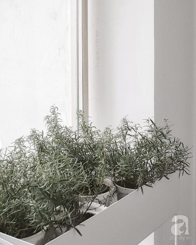 Ban công nhỏ với những cây hương thảo xinh xinh.