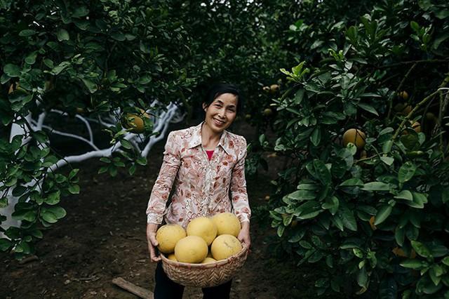 Bà Phí Sinh Hoạt, chủ vườn tại Phú Diễn cho hay, bây giờ, có rất nhiều nơi trồng bưởi và rao bán với giá rẻ hơn nhưng chất lượng không thể so sánh được với bưởi Diễn. Những người sành ăn thường tìm đến tận vườn để mua bằng được thứ bưởi Diễn được trồng trên chính đất Diễn. Bưởi năm nay lại được mùa được giá nên người nông dân vô cùng phấn khởi.