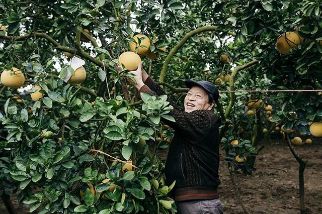 Ông Mai Trâm, một tiểu thương buôn bưởi nhiều năm nay ở Hà Nội cho hay: Bưởi Diễn luôn là loại quả bán chạy trên thị trường, nên người dân nhiều vùng quê lân cận như các huyện ngoại thành Hà Nội chọn trồng. Tuy nhiên cùng một giống nhưng bưởi Diễn ở những vùng lân cận vị nhạt hơn, muốn có được vị ngọt cũng phải mất 15 – 20 năm chăm sóc.