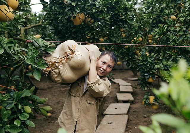 Nhiều thương lái và khách hàng đã đến tận vườn đặt mua bưởi phục vụ dịp Tết Nguyên đán sắp đến. Năm nay, giá bưởi dao động ở mức 40.000 – 60.000 đồng/quả bán tại vườn. Đặc biệt những trái bưởi từ cây được trồng lâu năm (20 - 30 tuổi) có giá cao hơn hẳn và thường không có bán ra thị trường, ông Trâm - một lái buôn cho hay.