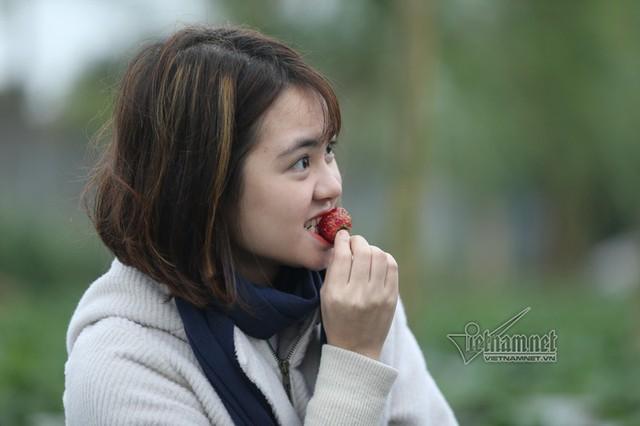Chị Bùi Thanh Nga cùng bạn thích thú thưởng thức những trái dâu thơm ngọt ngay tại vườn