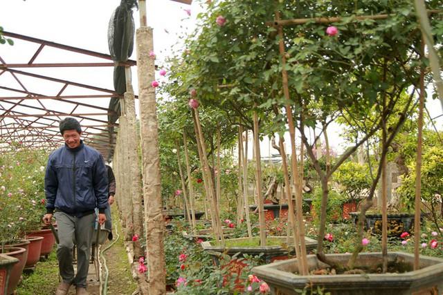 Tại làng nghề cây cảnh Phụng Công và Xuân Quan (Văn Giang, Hưng Yên), đại đa số các nhà vườn đều trồng hồng. Hoa hồng được trồng lâu đời ở Việt Nam, nhưng vài năm trở lại đây được chuộng hơn. Hiện có hơn 80% hộ trồng trọt ở làng nghề Phụng Công đều chuyển sang trồng hồng, anh Thoại, 42 tuổi, chủ một nhà vườn ở đây cho biết.