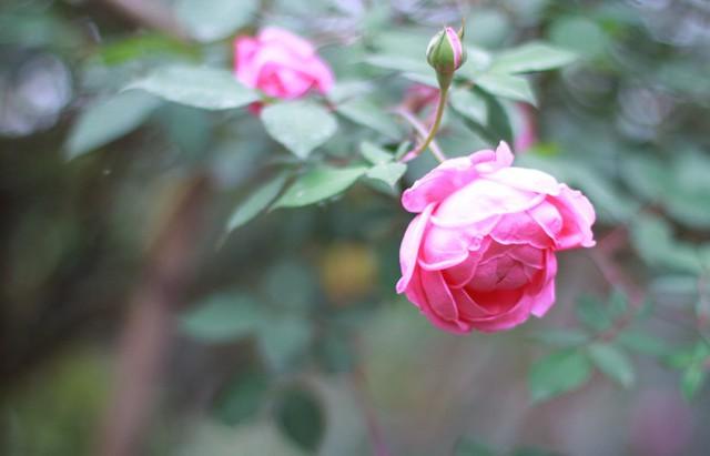 Điều đặc biệt là chúng ra hoa gần như quanh năm.