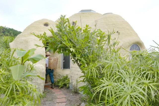 Lối vào nhà xanh tươi với cây cỏ, giản dị với gạch lát uốn cong.