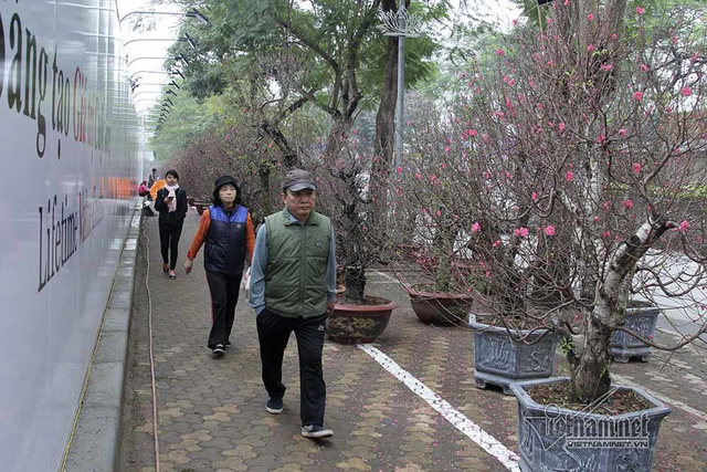 Đào được xếp hàng dài cả cây số trên vỉa hè đường Lạc Long Quân, người i bộ tha hồ thưởng hoa