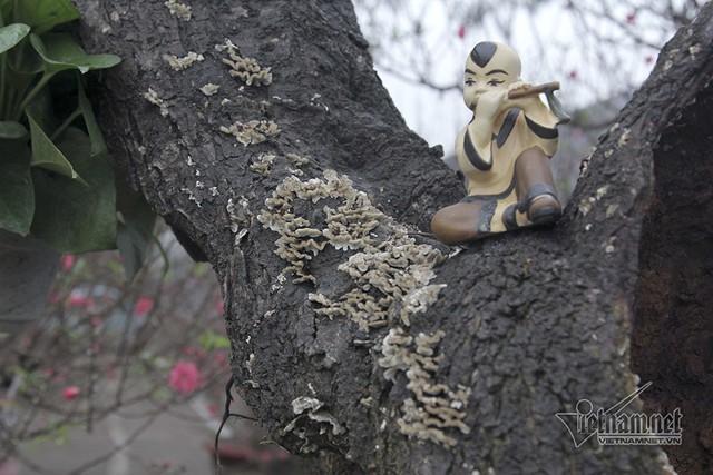 Những vết sần sùi, nấm mốc càng tôn thêm nét cổ kính của cây
