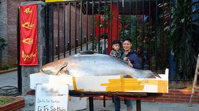 """Cá tra """"khủng"""" được đưa về Tp Lào Cai."""