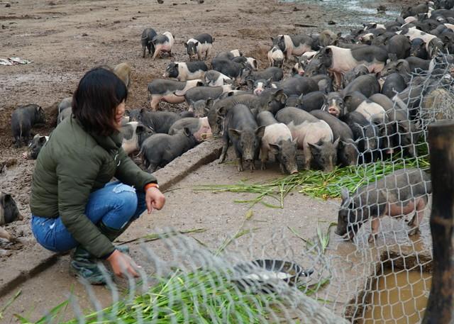 Ngoài khẩu phần ăn là cỏ tự nhiên, gia đình còn bổ sung thêm cám ngô, cám gạo...