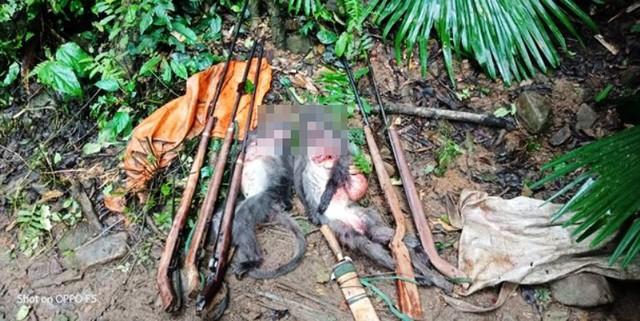 Hai con vọoc quý hiếm bị các đối tượng giết chết.