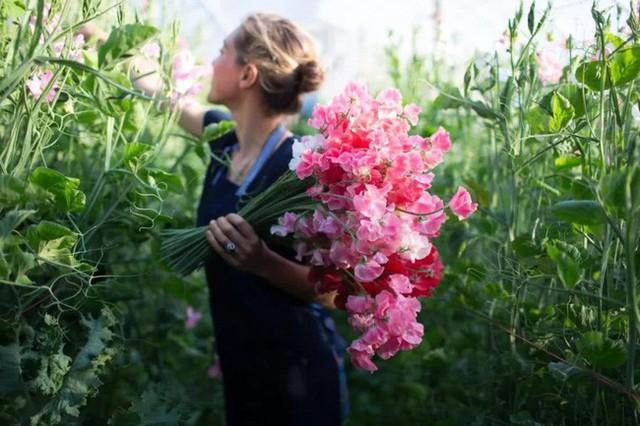 Một phần ký ức tuổi thơ của Erin với loài hoa đặc biệt này.