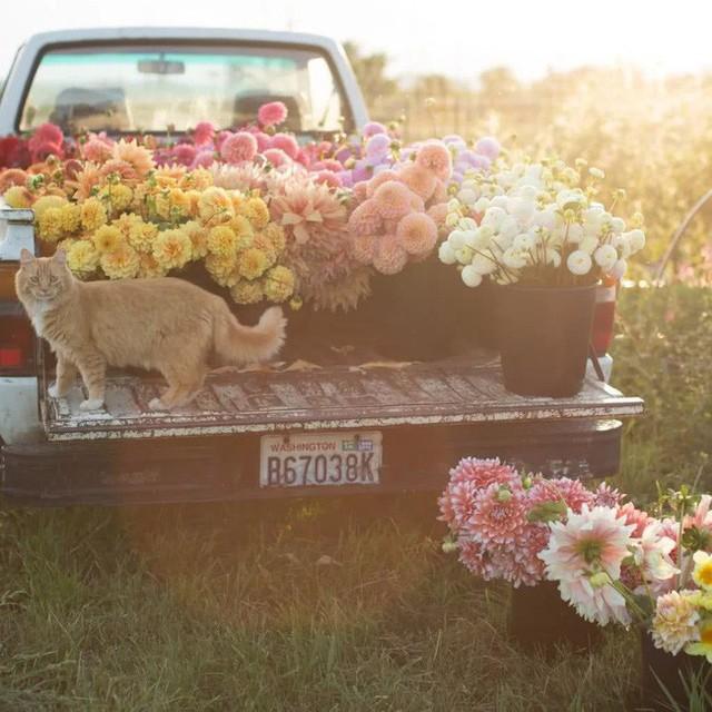 Thu hoạch hoa mỗi chiều.