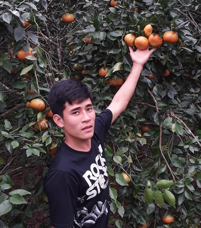 Theo anh Cao Phúc Bảo chủ trại cam bù ở thôn 5, xã Sơn Trường năm nay do thời tiết nắng ấm nên cam được mùa hơn năm ngoái, trung bình mỗi cây có hơn 200 quả.