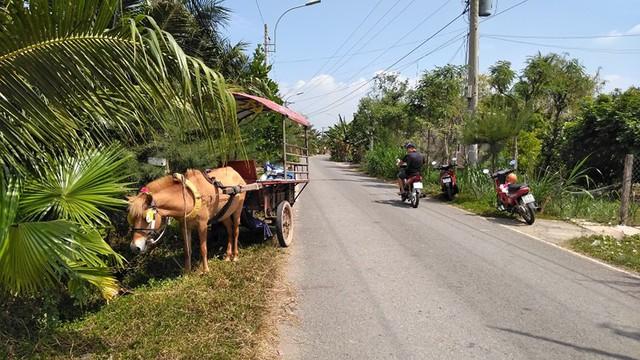 Chú ngựa kéo lê nạn nhân đi một đoạn.