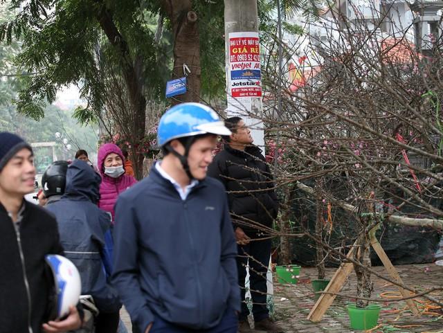 Tại rất nhiều tuyến đường ở Thủ đô, đâu đâu cũng tràn ngập đào, quất, cây cảnh khiến rất nhiều người dân không thể ngồi yên và đã tràn ra đường sắm Tết.