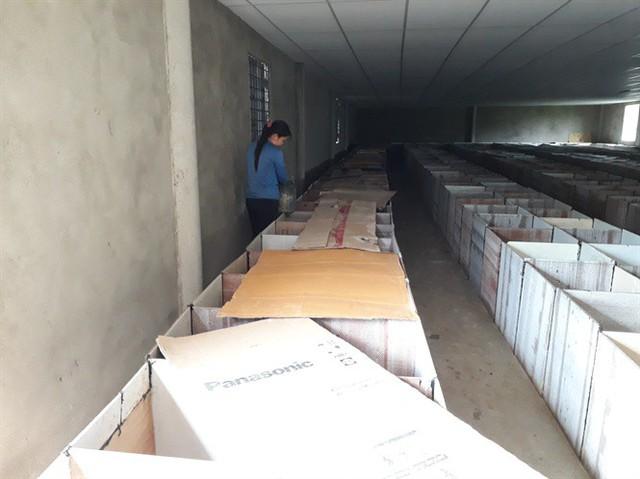 Hiện trang trại nuôi dúi của anh Xuyên có khoảng 4.000 con dúi các loại