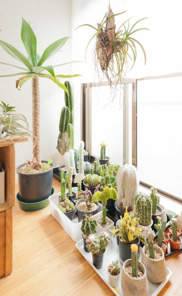 Vợ chồng Atsushi có niềm đam mê đặc biệt với các loại cây trồng trong nhà, cây cần ít sự chăm sóc nhưng vẫn đẹp duyên dáng khi ngắm nhìn.
