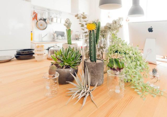 Trên bàn làm việc cũng được đặt rất nhiều các loại cây. Ngoài công việc thường ngày, cặp vợ chồng trẻ dành nhiều thời gian để bố trí tiểu cảnh, nhân giống cây và trồng các cây con.