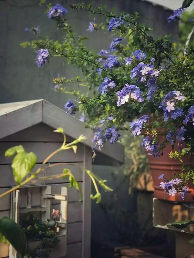 Mỗi góc nhỏ đều duyên dáng với hoa tươi do chính tay Lancome trồng.
