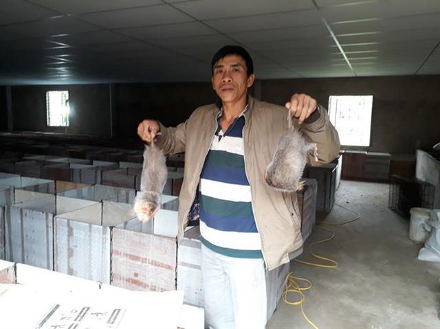 Mỗi năm anh Xuyên xuất bán ra thị trường khoảng 3 tấn dúi thương phẩm, thu lãi 6 tỷ đồng