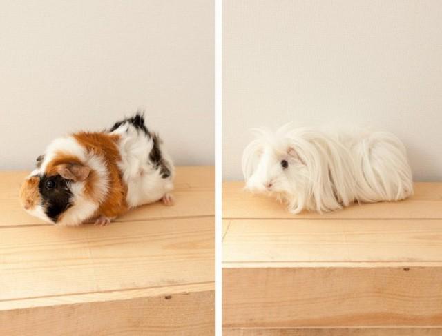 Ai có thể tin rằng, đây lại là những chú chó bằng bông vô cùng ấn tượng.