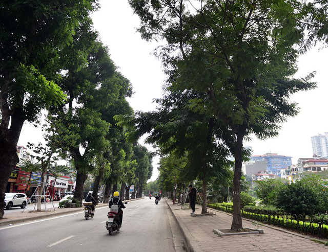 Dự án mở rộng, hạ cây xanh đường Láng nằm trong 4 đề án được sở GTVT Hà Nội triển khai dịp cuối năm nhằm giảm thiểu ùn tắc giao thông.