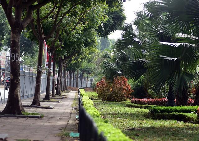 Sở GTVT đang tiến hành xén vỉa hè, hạ cây xanh để mở rộng đường Láng.