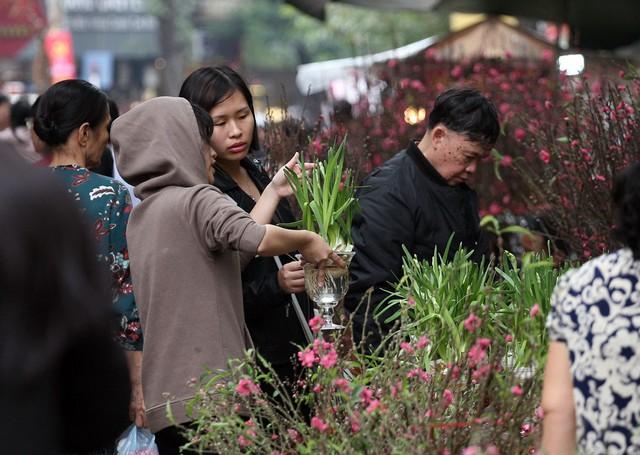 Những loài hoa mới du nhập vào Việt Nam những năm nay cũng xuất hiện tại chợ Hàng Lược.
