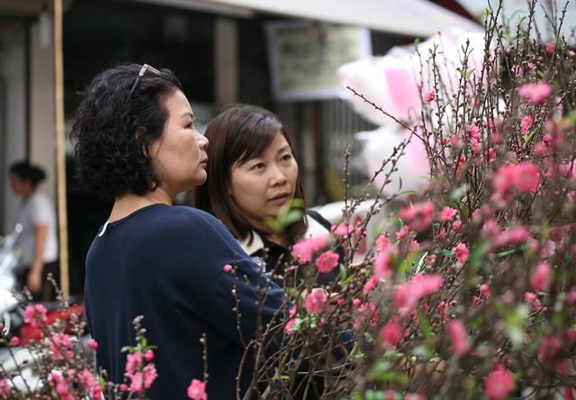 Những cành đào Nhật Tân chính hiệu được bày bán dọc lối di chuyển tại chợ hoa.