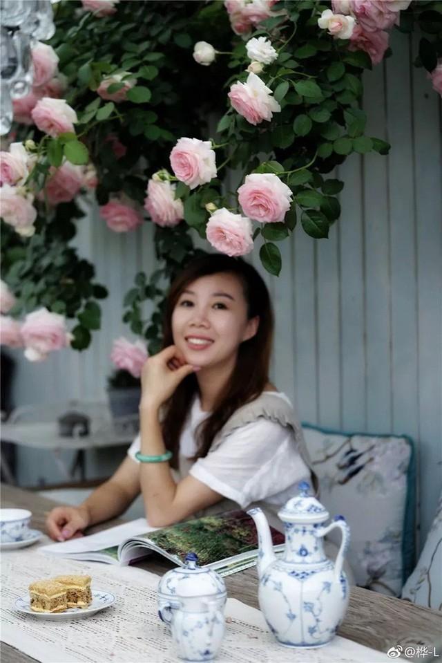 Hoa hồng nở rộ đầy quyến rũ trên sân thượng.
