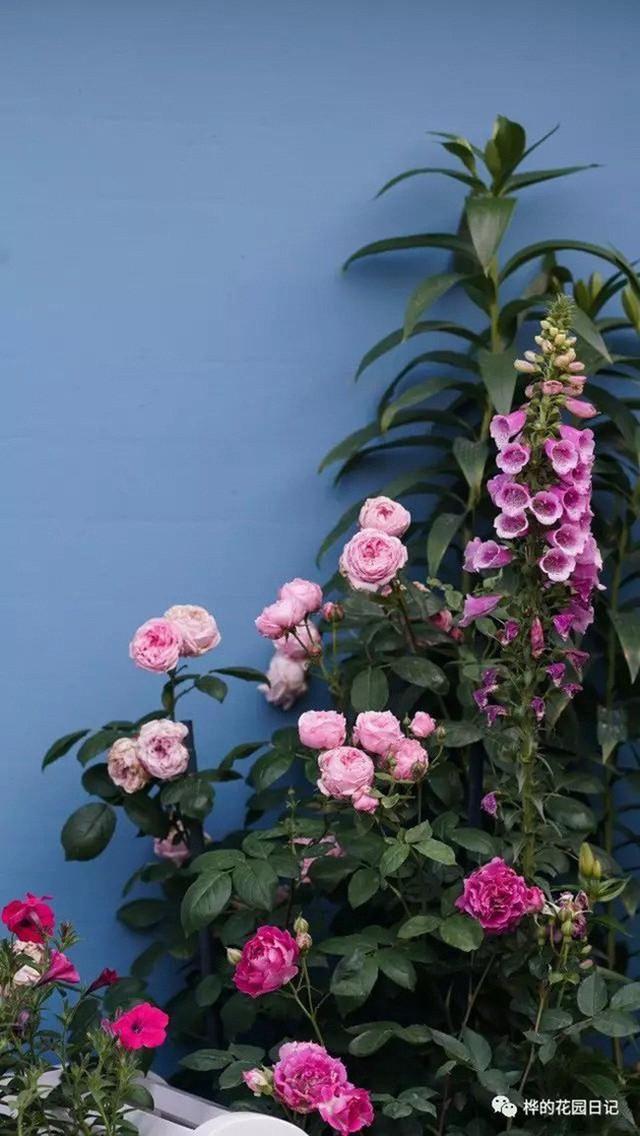 Góc hoa nổi bật trên nền sơn màu xanh.