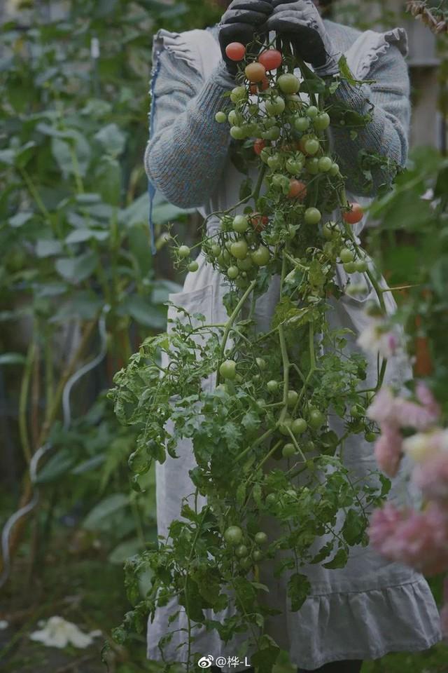 Bà mẹ trẻ còn dành khoảng trống trồng rau quả.