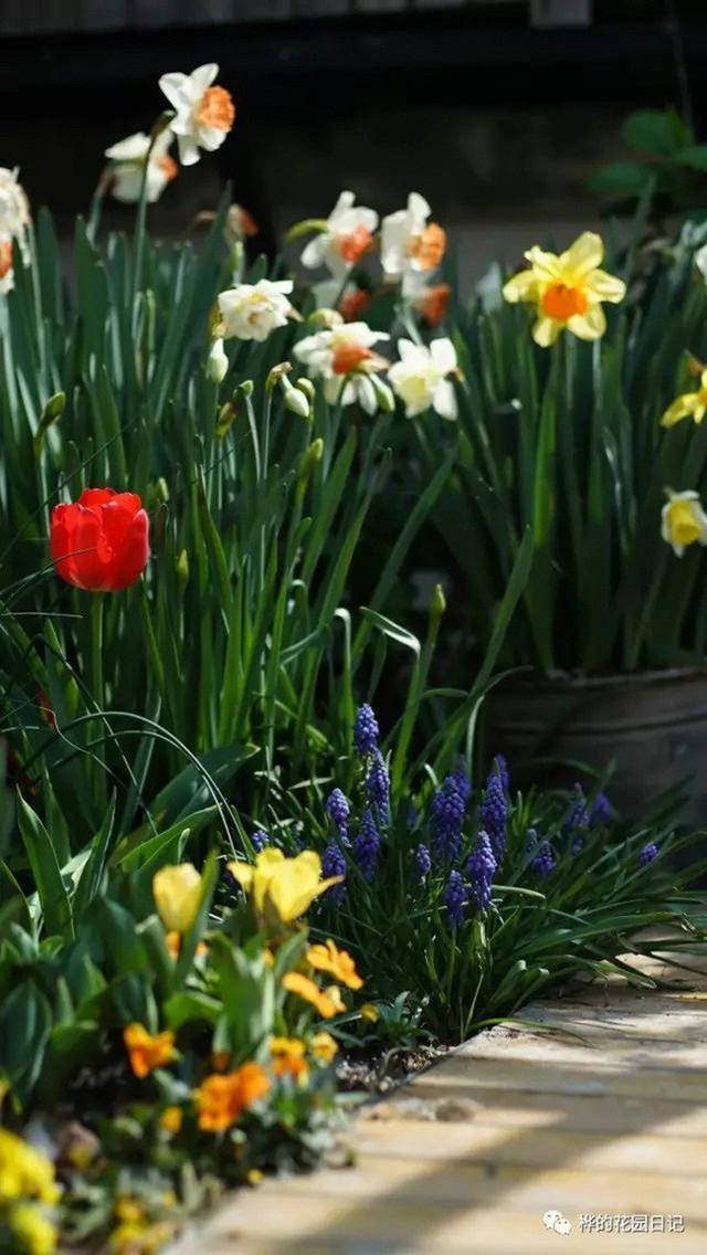 Hoa nở rực rỡ vào mùa xuân.