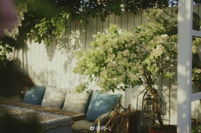 Góc vườn đẹp lãng mạn.