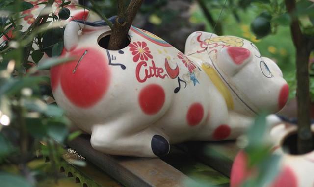 Giá của cây quất bonsai chú lợn đất dao động từ khoảng 2 - 5 triệu đồng. Ảnh: VOV
