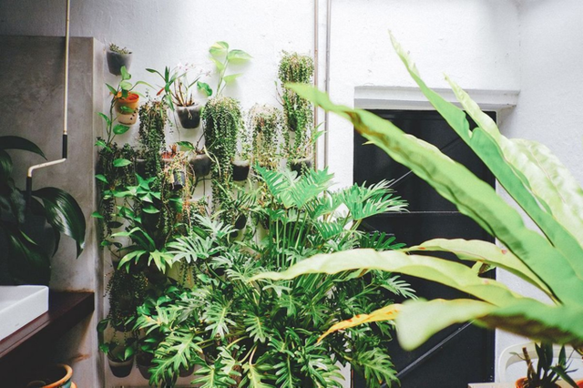 Một góc nhỏ trồng cây xanh - những loại cây dễ trồng và ít tốn thời gian chăm sóc.
