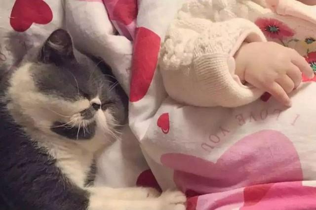 Chú mèo béo xinh xắn làm bạn cùng em bé.