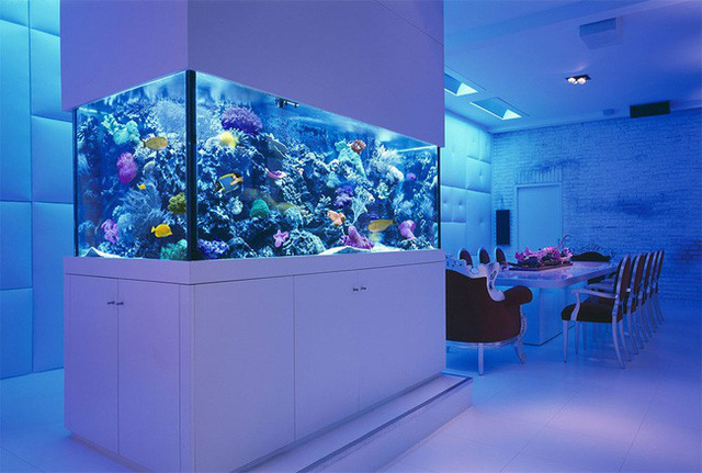 4. Bạn có thể đầu tư hẳn một dàn đèn chiếu sáng để phối kết hợp với màu nước trong bể thì trông sẽ tuyệt vời như thế này đó.