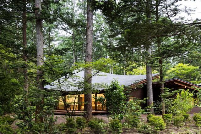 Để hình thành mặt cắt thay đổi phù hợp với từng khối nhà, mái nhà được thiết kế dạng cong như những chiếc lá xoắn nhẹ nhàng.