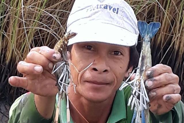 Tôm càng toàn đực mấy năm gần đây được nuôi nhiều tại các tỉnh ven biển có mô hình tôm- lúa vì môi trường thích hợp, dù lợi nhuận không cao nhưng hoàn toàn có lãi. Ảnh: Nhật Hồ.