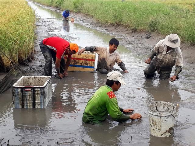 Theo thống kê chưa đầy đủ của Sở Nông nghiệp và Phát triển Nông thôn Bạc Liêu, Cà Mau, Sóc Trăng, 3 tỉnh này có đến trên 20.000ha diện tích nuôi tôm càng xen canh trên đất lúa - tôm. Trung bình mỗi ha lợi nhuận trên 5 triệu đồng cho 6 tháng nuôi. Ảnh: Nhật Hồ.