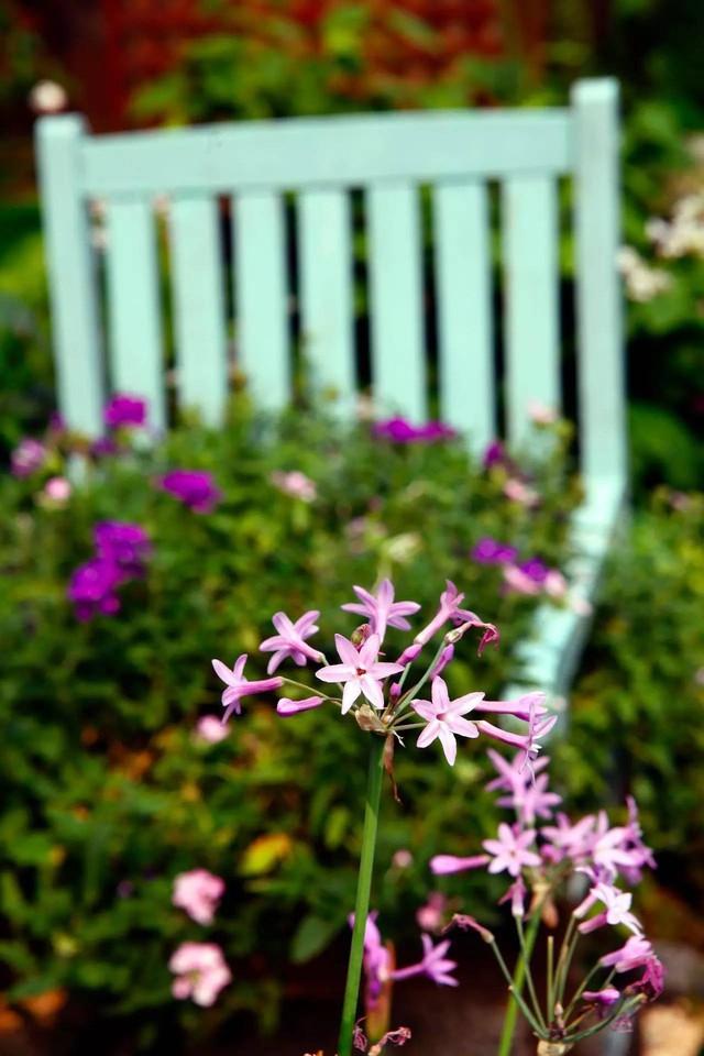 Khu vườn được trồng nhiều loại hoa.