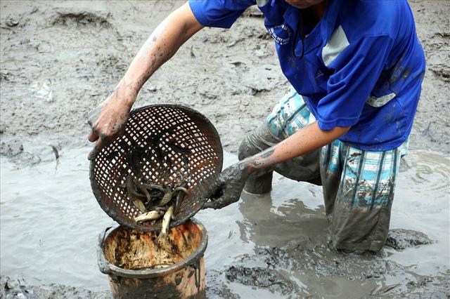 Do nuôi hỗn hợp trong đầm, không sử dụng thức ăn, hóa chất, nên trong vuông thu hoạch có cả cá chốt. Ảnh: Nhật Hồ.