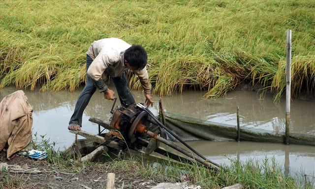 Trước khi thu hoạch phải rút nước cho khô mới bắt tôm càng được. Ảnh: Nhật Hồ.