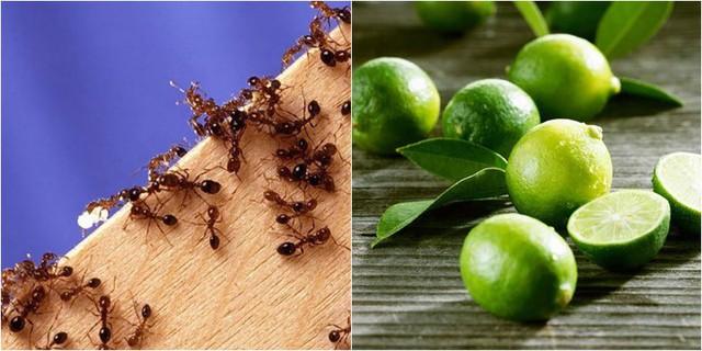 Nhà sạch bách không còn một con kiến nhờ loại quả dễ mua dễ tìm này - Ảnh 1.