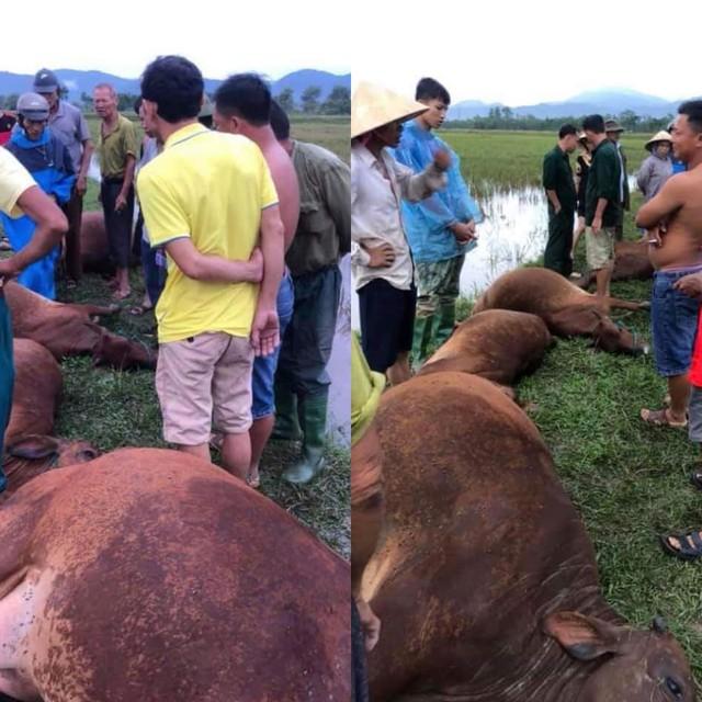 Hà Tĩnh: Sét đánh 1 người nguy kịch, 6 con bò bị chết - Ảnh 1.